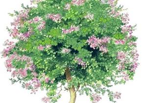 100张园林景观手绘植物图片
