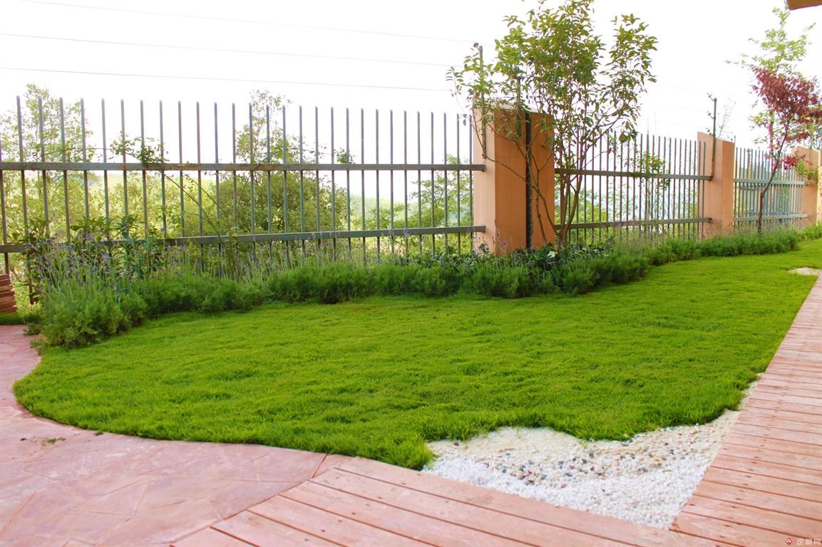 剪股颖草坪已经生长的比较好了