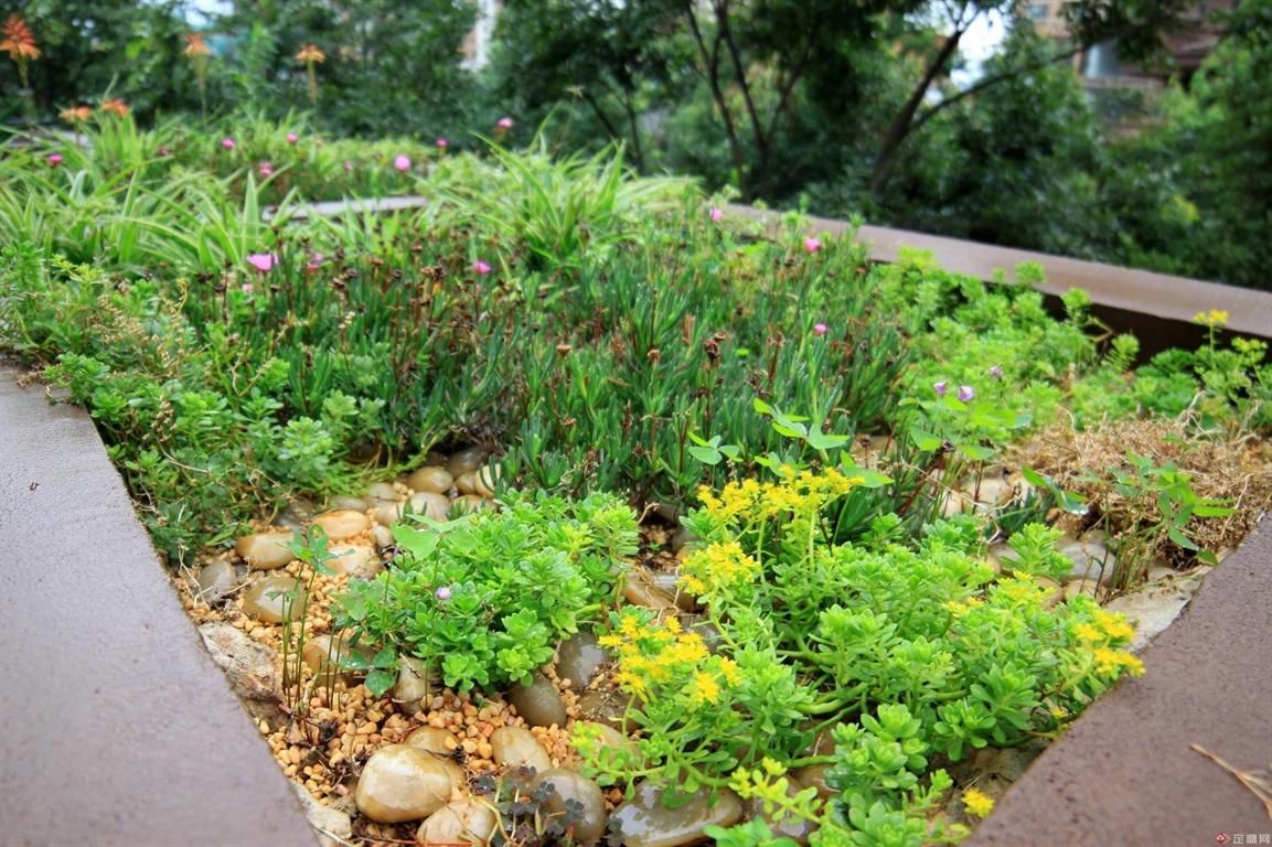 景天科佛甲草布置的露台小花园,具有很强的野趣味道。