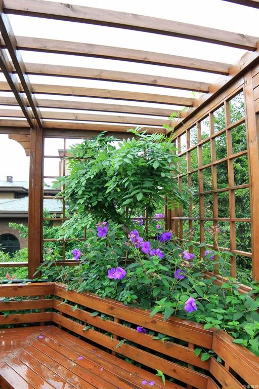 期待爬满廊架的紫藤花!