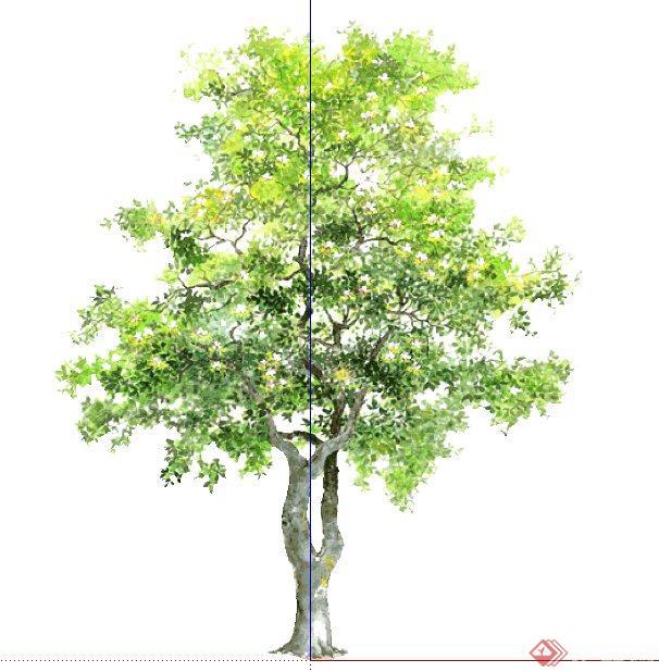 6株手绘风景观植物su模型素材(4)