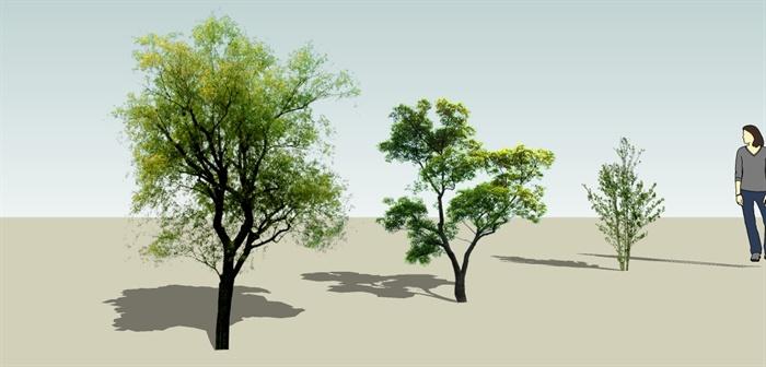 三棵常绿树木su植物素材[原创]