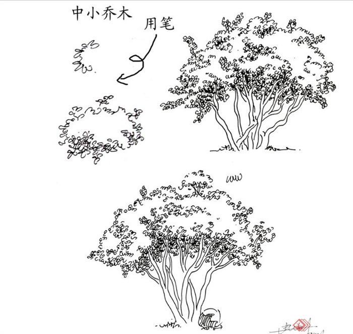 关于园林景观植物平面,立面手绘word文本