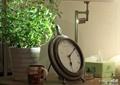 钟表盘,杯子,植物盆栽,摆件