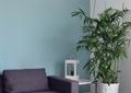客廳,茶幾,沙發,盆栽植物