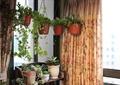 植物架,吊篮,窗帘