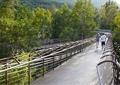 景观桥,桥,步行桥