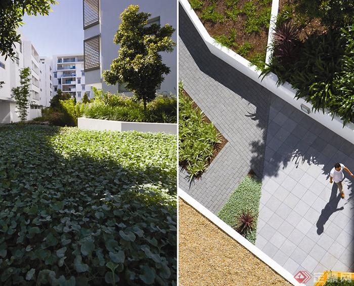 庭院景观设计实景图-树池花池道路铺装-设计师图库