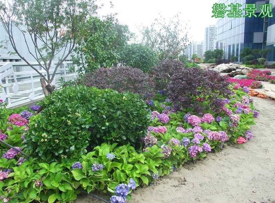 西安园林绿化 西安立体绿化 西安水景景观 西安防腐木 屋顶花园