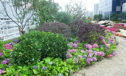 安康屋顶花园景观绿化设计工程