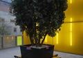 树池坐凳,树池,方形树池