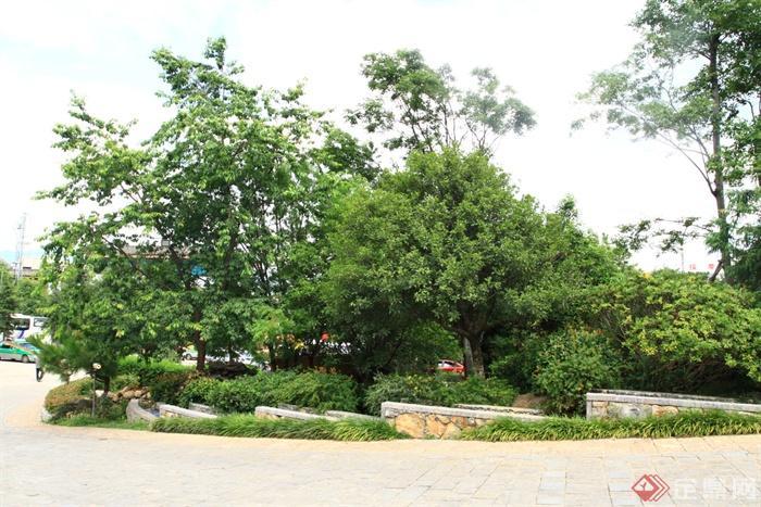 城市景观节点设计图-花坛植物-设计师图库