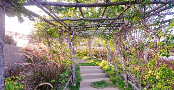 城市景观节点设计图-花架汀步植物-设计师图库