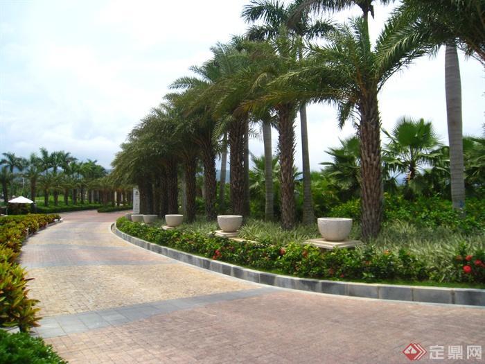 简欧风格小区景观-棕树道路景观铺装花钵花池-设计师