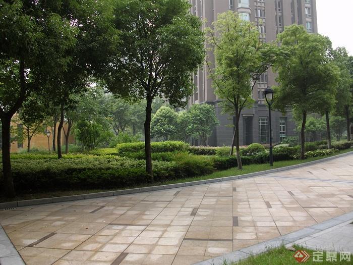 园路,植物,地面铺装