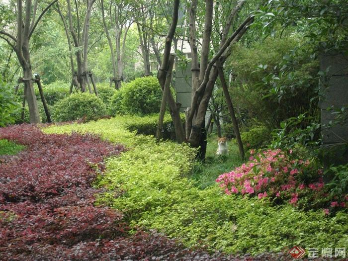 现代住宅景观规划设计图-灌木花卉乔木-设计师图库