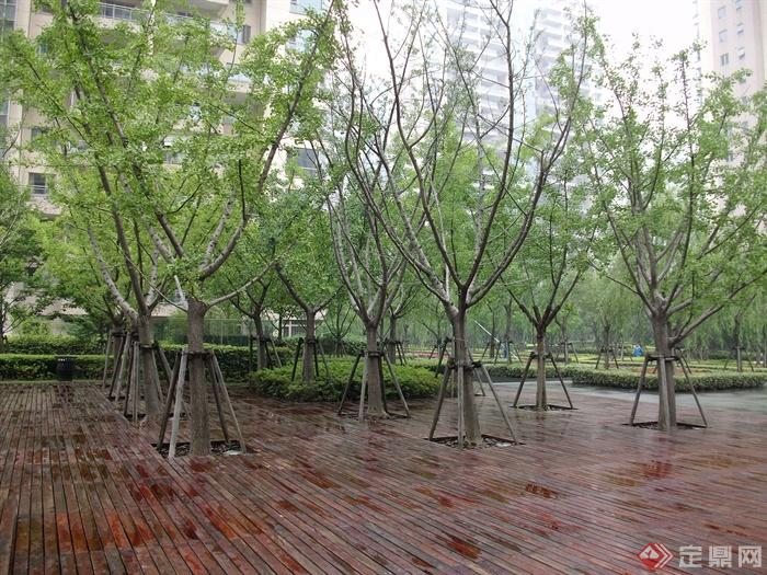 现代住宅景观规划设计图-木地板树池植物-设计师图库