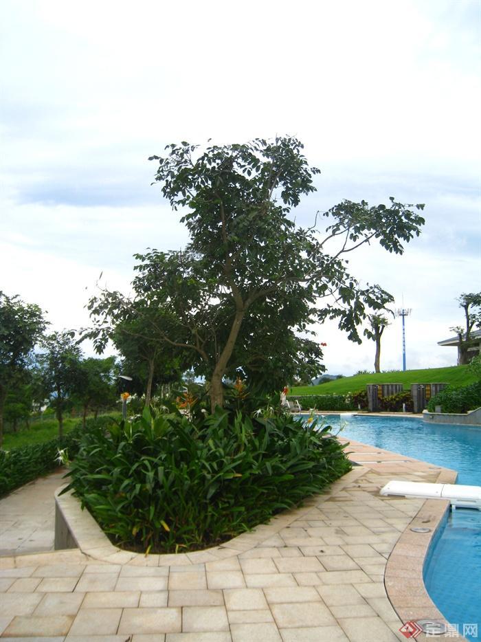 现代某多层别墅区景观规划设计图-花池地面铺装游泳池