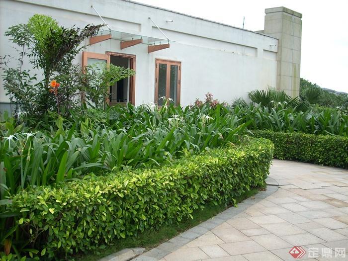 园林道路景观设计图-植物地面铺装-设计师图库