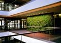植物墙,栏杆,垂直植物