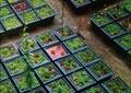 植物槽,垂直植物