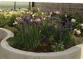 曲线花池,花卉