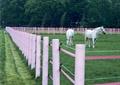 马场,马,草坪