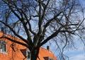 住宅建筑,枯枝树