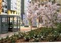 住宅景观,花卉植物,自行车棚