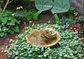 水景,藤蔓植物,叶子形坐凳,地面铺装