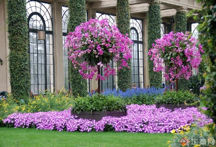 长木私家花园景观-花卉植物吊花藤蔓植物-设计师图库