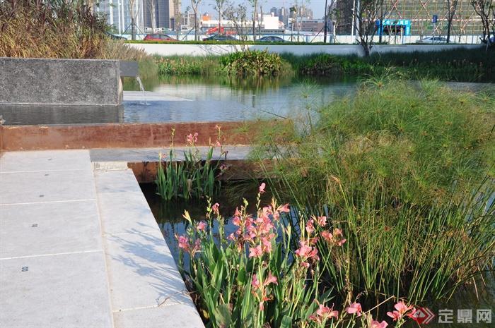 现代某前海万科企业公馆景观设计图-纸莎草鸢尾滨水水