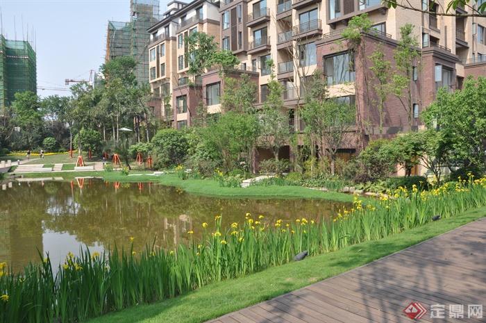 某住宅小区景观设计图-鸢尾住宅景观水景驳岸花卉植物