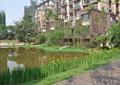 住宅景观,水景,驳岸,花卉植物,草坪,木道路