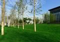 草坪景观,观干乔木