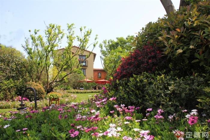 花卉,灌木,景观植物波斯菊