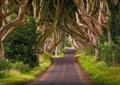 林荫道路景观,道路,草坪,观干乔木
