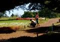 田园景观,田园花园,木桩,围栏