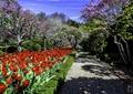 花卉,景观植物,庄园,庭院景观