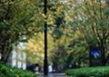 树池坐凳,灯柱,植物,叶子