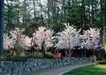 矮墙,景观植物,草坪
