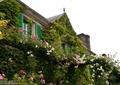 花架,植物墙,垂直绿化