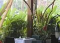 餐桌椅,吊灯,干枝装饰,绿植