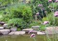 花卉植物,涉水景观,景石,灌木植物