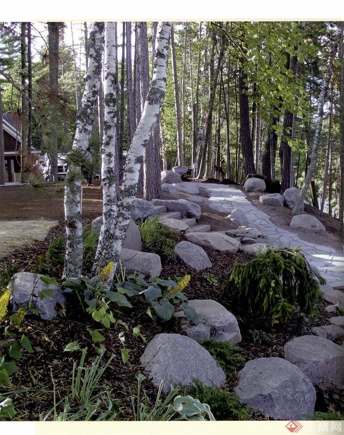 园路,景石,落叶乔木,地被植物,住宅景观