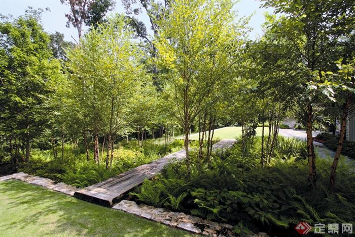 欧式风格景观节点设计图-肾蕨木园路草坪蕨类植物