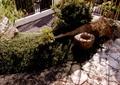 庭院,庭院景观,园路铺装