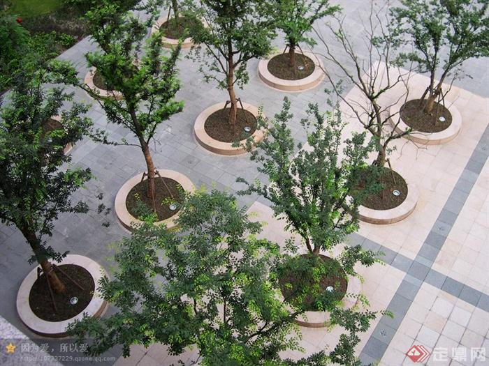 现代派景观节点设计实景图-树池树池坐凳树池灯园路