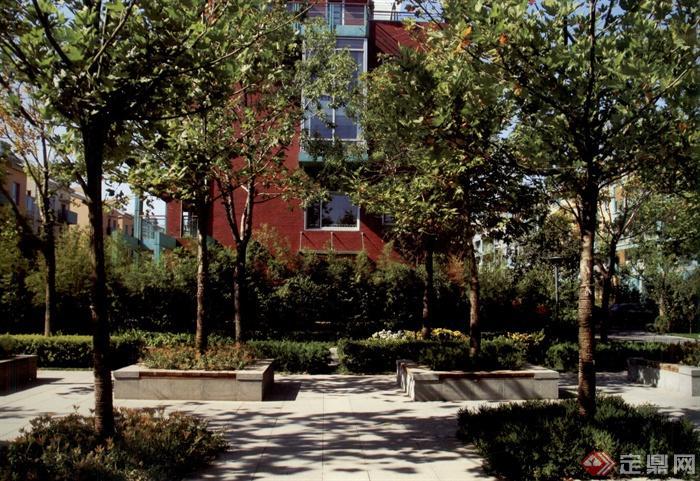 现代风格景观实景图片-树池常绿乔木-设计师图库
