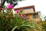 入户花园木制花槽中盛开的太阳花